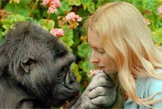 """全球最聪明!懂手语大猩猩""""可可""""去世了"""