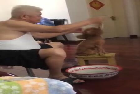 有一种狗叫爷爷带的狗